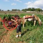 Holiday Farm Country  Apulia  Accommodation Country  Apulia   Holiday Rental  Country Apulia
